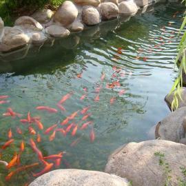 别墅景观水处理\别墅景观水杀菌除藻器