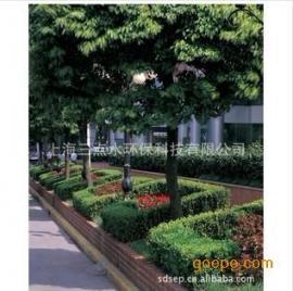 供应绿化工程苗木