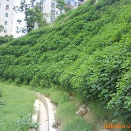 绿化生态袋,荒山绿化 净化环境
