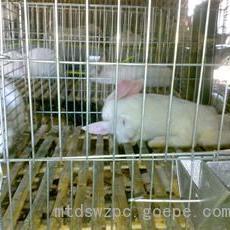 鸡鸽兔笼供应商