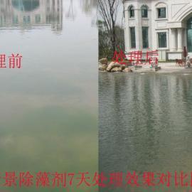 新景除藻剂价格