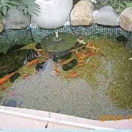 锦鲤鱼池过滤用石英砂净化系统