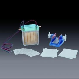 六一双垂直电泳槽/DYCZ-24EN电泳仪