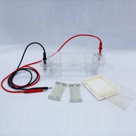 琼脂糖水平电泳仪/DYCP-31CN琼脂糖电泳仪