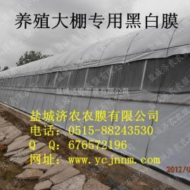 塑料大棚养殖专用黑白膜