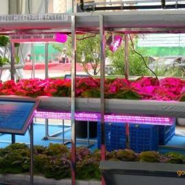 植物生长灯 蓝梅专用补光灯