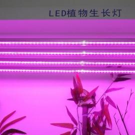 花卉 LED补光灯