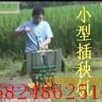 小型插秧机厂家直销 湖南小型水稻插秧机 东北插秧机价格