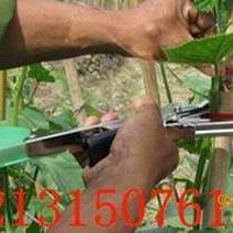 绑葡萄藤工具 介绍葡萄绑枝机功能