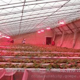 北京LED植物补光灯
