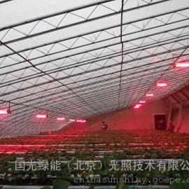 北京植物补光灯