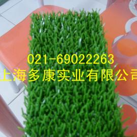 (上海多康)淘金草、吸金草、捞金草