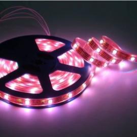 3528LED软灯条丨低压LED软灯条 led灯带价格