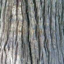 桉树树皮燃料
