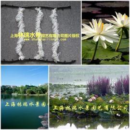 景观水处理原理_悬浮生物填料