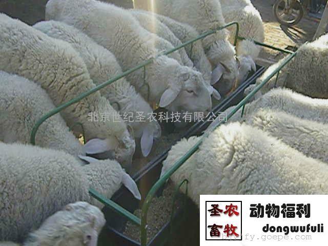 供应羊食槽