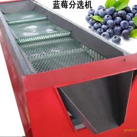 全自动蓝莓选果机,蓝莓自动筛选分级机,无损伤蓝莓分果机