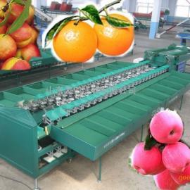橙子柑橘重量分选机 选果机