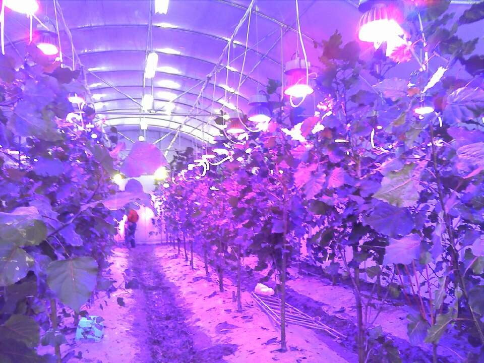 led植物补光灯
