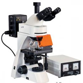 L3001落射荧光显微镜