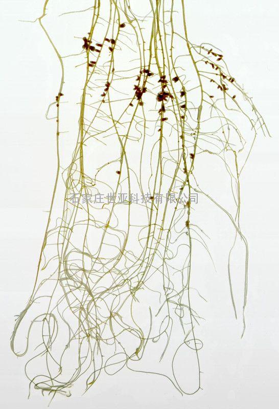 植物根系分析系统