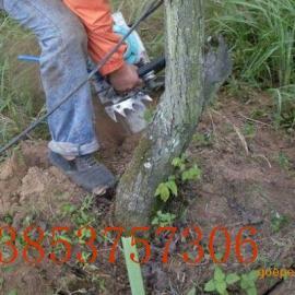 带土球起苗机 安全快速高效带土球起苗机