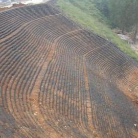 生态袋护坡生态袋植草生态袋绿化