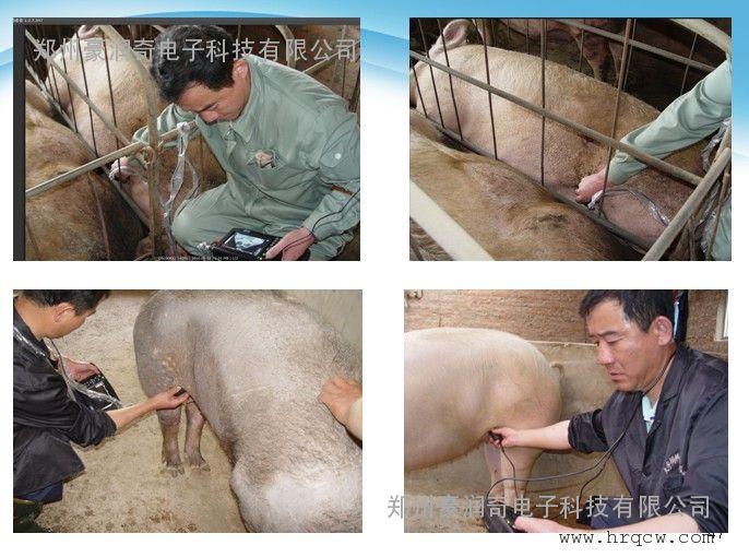 兽用B超诊断仪器产品报价