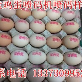 四川土鸡蛋喷码机,鸡蛋日期喷码机,小型整盘鸡蛋喷码机