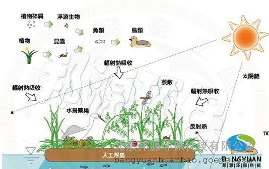 据上述报道,可想而知人工浮岛对改善水体水质是有着明显效果的,人工浮岛的水质净化的定义因目的、对象的不同而有所不同,人工浮岛的水质净化主要针对富营养化的水质而言的,通过减少COD(化学需氧量)、氮、磷的浓度来抑制藻类的发生,提高水体透明度,它的净化机理基本上与湖沼沿岸植物带的水质净化机理相似。根据有关研究资料,湖沼沿岸植物带的水质净化要素由以下7点:1.