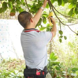 树枝修剪电动工具批发、嘉航品牌果树电动修剪机厂家直销