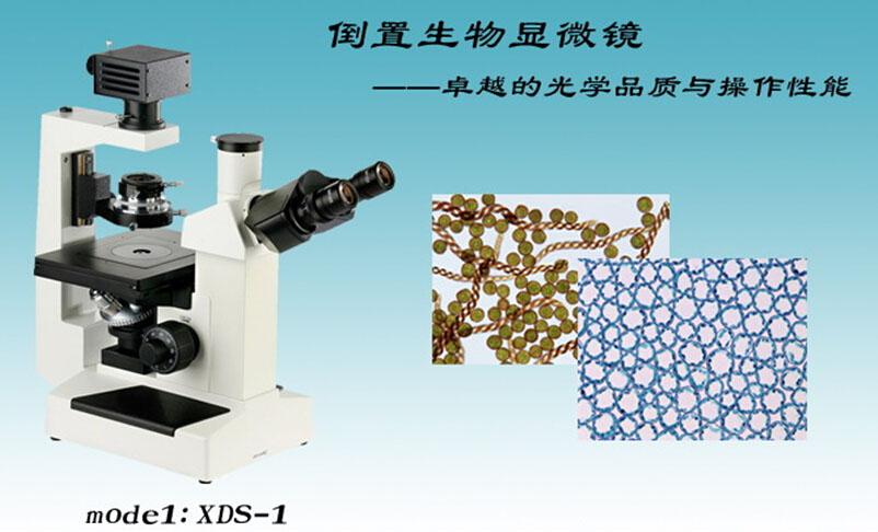 xds-1倒置生物显微镜