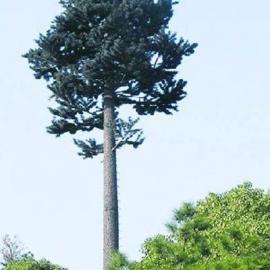 广信 基站仿生松树
