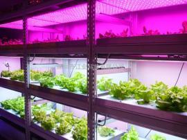 全光谱植物生长灯,全光谱植物灯,植物灯生长灯厂