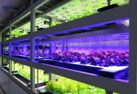 T8LED植物灯1.2米14W大棚果蔬育苗多肉组