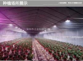 LED植物灯 大棚照明灯