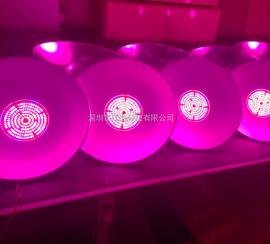 大棚led植物灯首选美创照明 专业led照明厂