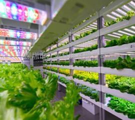 LED温室灯植物生长灯 T8一体化植物生长灯管