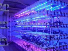 20W植物LED灯管 全光谱生长灯 室内水培蔬菜草莓生长专用LED灯管