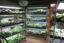 T8灯管 LED植物灯生长灯 室内盆栽灯管