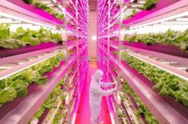 室内植物生长灯 *生产照明节能LED灯