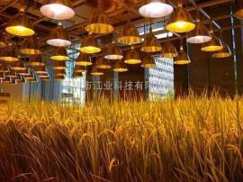 led植物灯室内大棚种植育苗灯