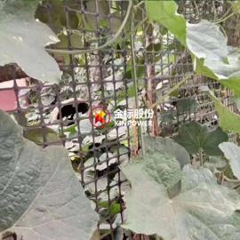 植物攀爬网(双向塑料土工格栅) 绿色环保,造价低