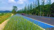 彩色陶瓷颗粒路面胶粘剂用于园林道路