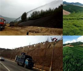 8立方公路边坡绿化草籽喷播机