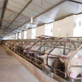 农业养殖场人造雾喷雾降温除臭消毒设备