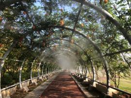 园林凉亭景观人造雾喷雾降温工程