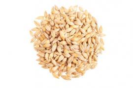 大麦脱壳机