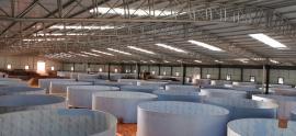 工厂化水产养殖 工厂化循环水养殖 循环水养殖91视频i在线播放视频