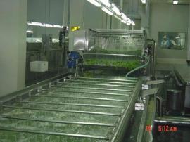 1000型韭菜大姜清洗机